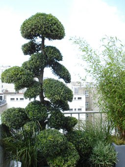 un jardinier paysagiste am nage votre jardin terrasse balcon nantes. Black Bedroom Furniture Sets. Home Design Ideas